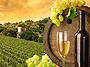 Premium Wine Excursion with Brewens Infinity Experiences